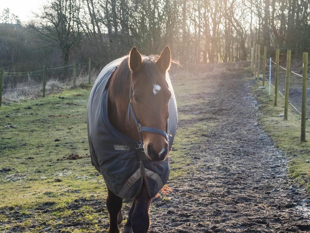 Kan der stadig tegnes sygeforsikring, hvis hesten er uanvendelig?