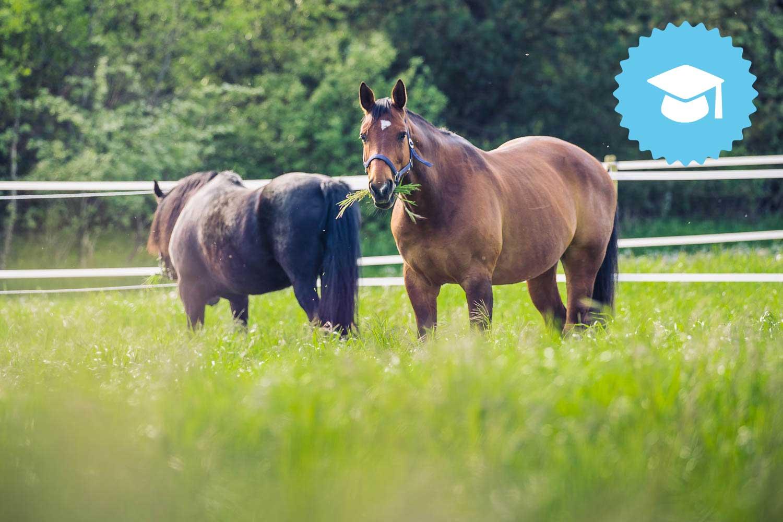 Fodring-af-forfangen-hest