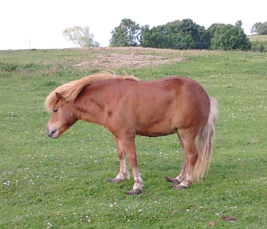 Figur-13-Forfangen-pony