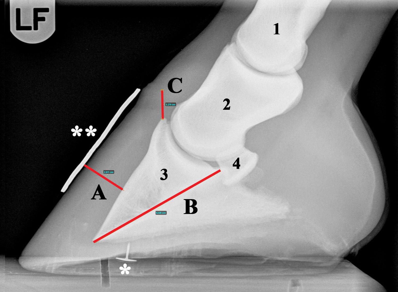 Figur-4B-Røntgen-annoteret