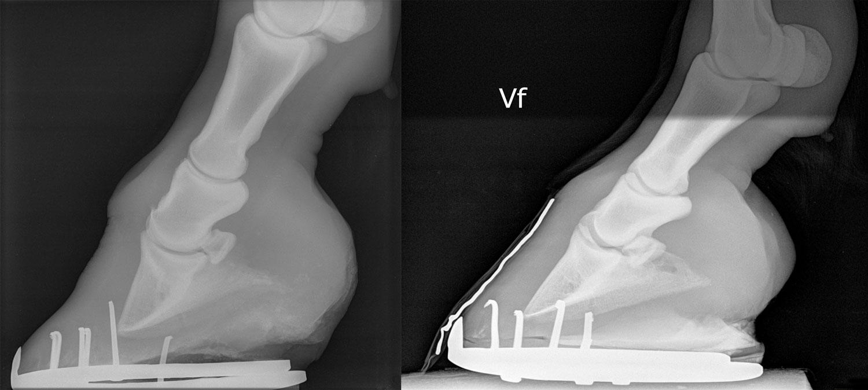 Figur-7-Eksempler-på-røntgen