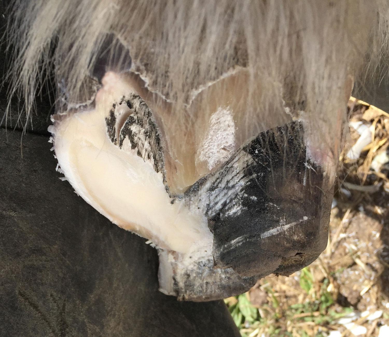 Figur-8-hov-delvist-beskåret