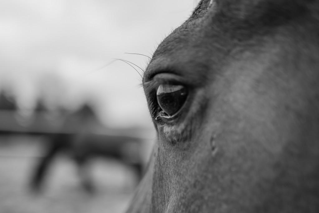 Hestehimlen (1 of 1)