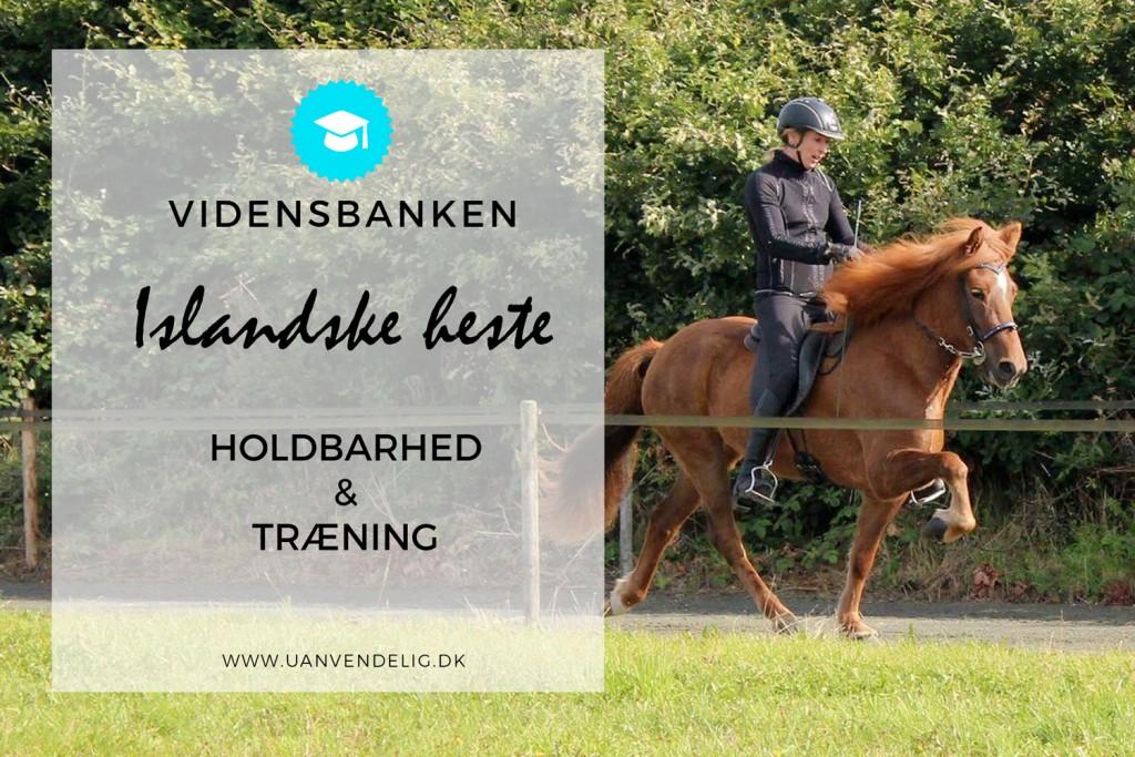 Træning-af-den-islandske-hest