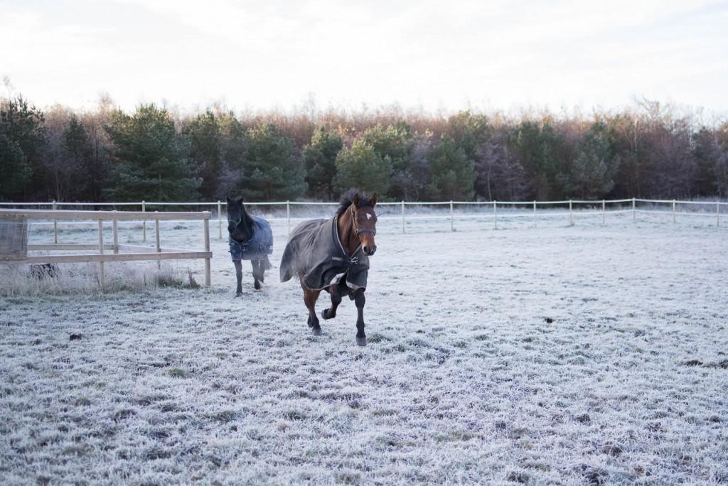 Uanvendelig vinterstemning (8 of 11)