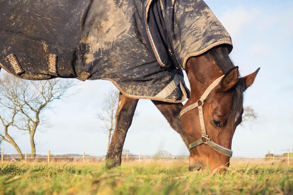 rekreation for hesten