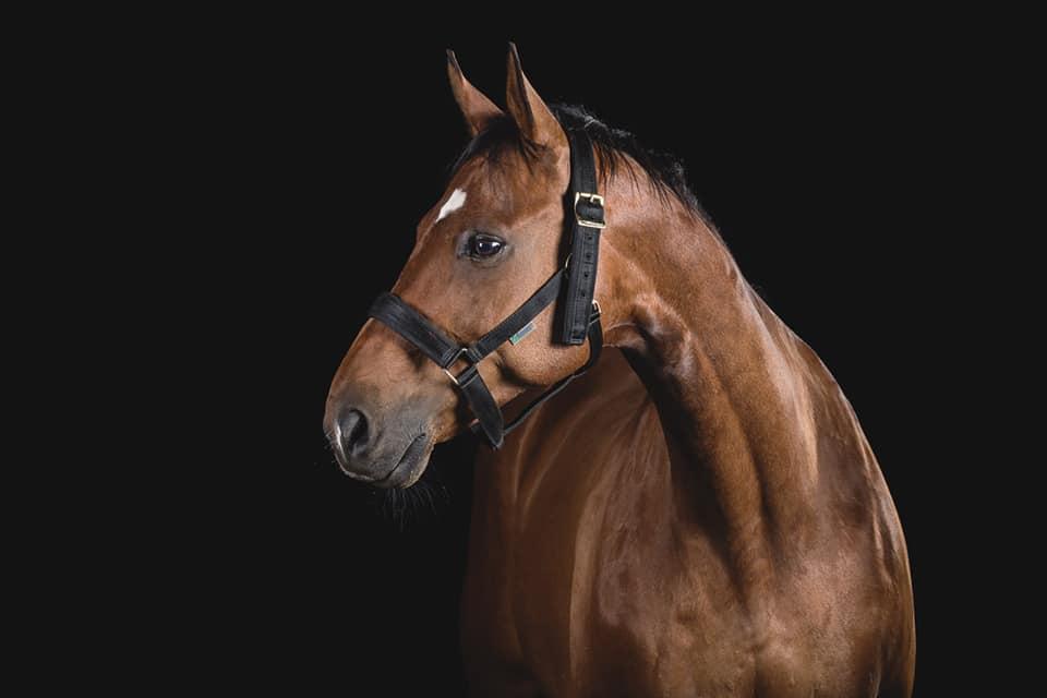 køb af hest